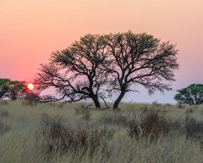 Kgalagadi Park, South Africa